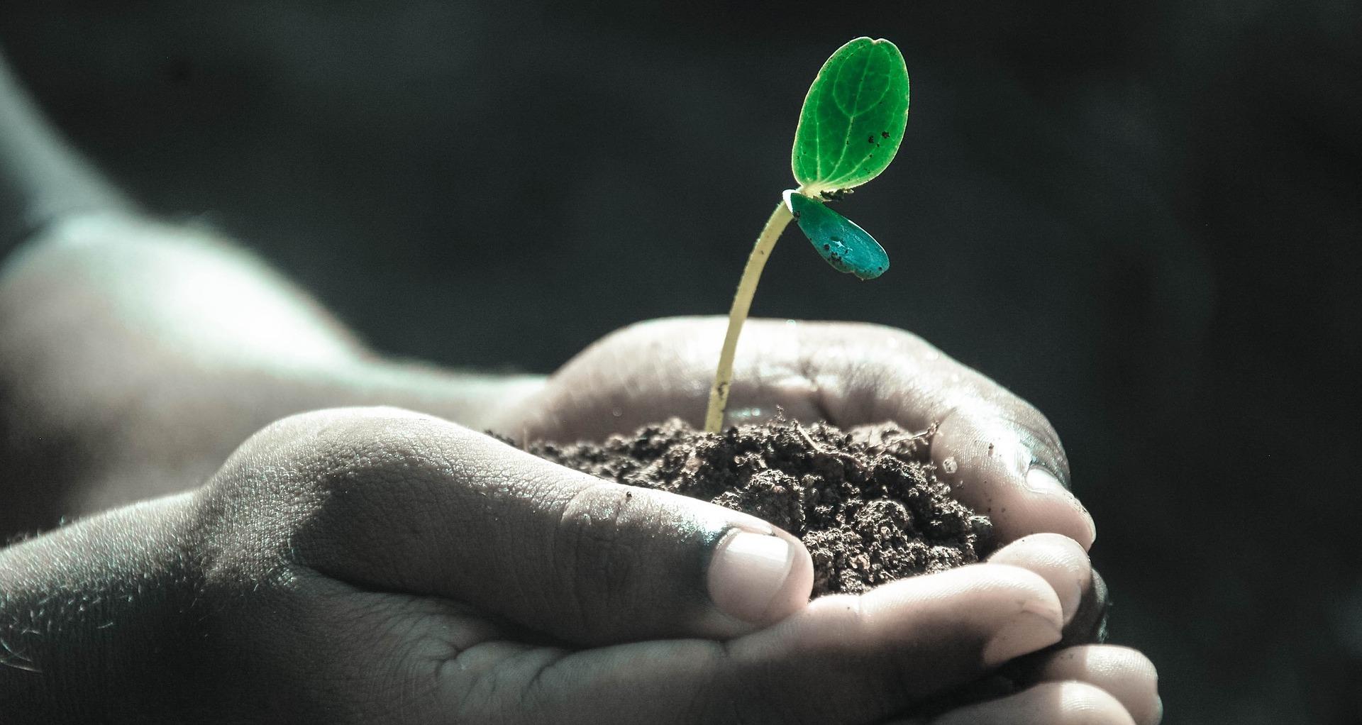 Hvordan blir en plantes vekst påvirket av tyngdekraften?
