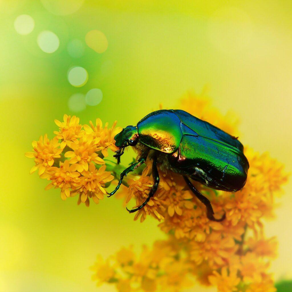 BIO-Consult arbeider for å fremme biologisk mangfold og balanse i naturen
